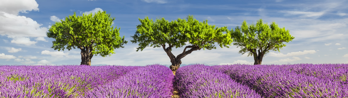 Das Lavendelfeld ist das Titelbild vom Fotokurs Bildgestaltung an der Fotoschule Blende-16.