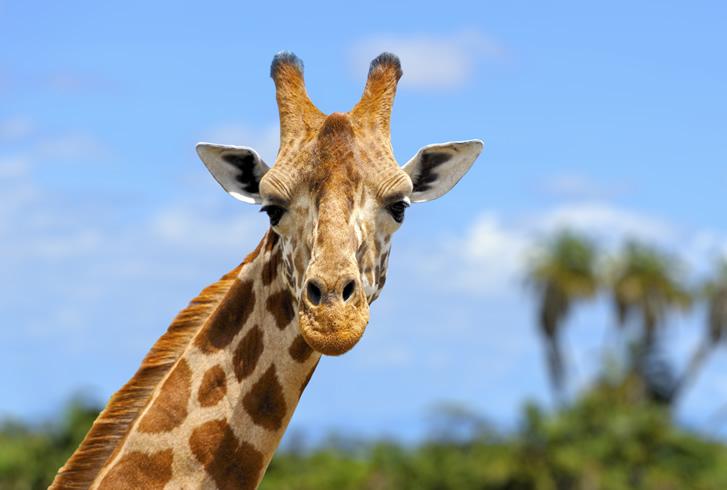Weil großartige Tierfotografien kein Zufall sind, wird der Einsteigerkurs Tierfotografie Sie begeistern.