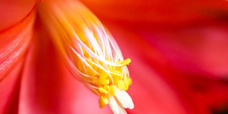 Der Fotokurs Makrofotografie für Fortgeschrittene ist ideal für alle, denen es Freude macht, beim Fotografieren nah heranzugehen.