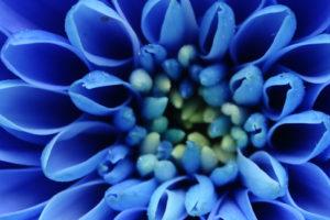 Die blaue Blüte ist das Titelbild vom Fotokurs Makrofotografie 1 an der Fotoschule Blende-16.