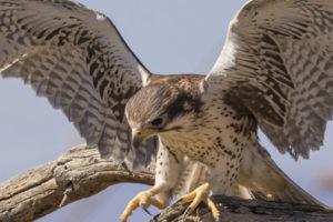Die Vogelfotografie ist oft eine faszinierende Art der Fotografie.