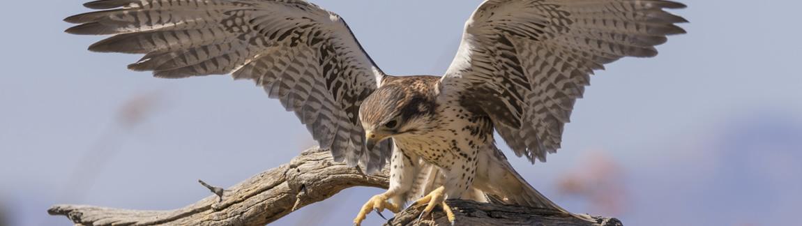 Sommerspecial Vogelfotografie