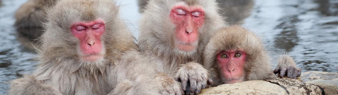 Die Affenfamilie ist das Titelbild der Fotokurse Tierfotografie an der Fotoschule Blende-16.