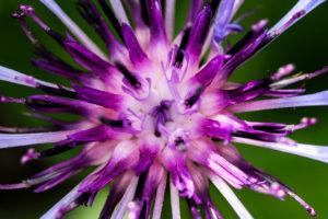 Die Blüte ist das Titelbild für die Fotokurse Makrofotografie an der Fotoschule Blende-16.